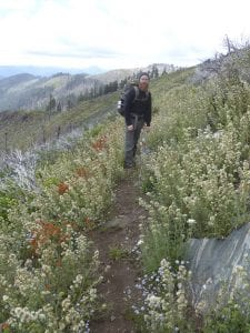 Luke on the Boundary Trail in the Kangaroo Roadless Area, on the edge of the Red Buttes Wilderness. This wonderful profusion of wildflowers followed the Fort Goff Complex fire of 2012.