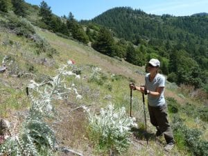 Suzie with western thistle (Cirsium occidentale) in the Applegate Foothills