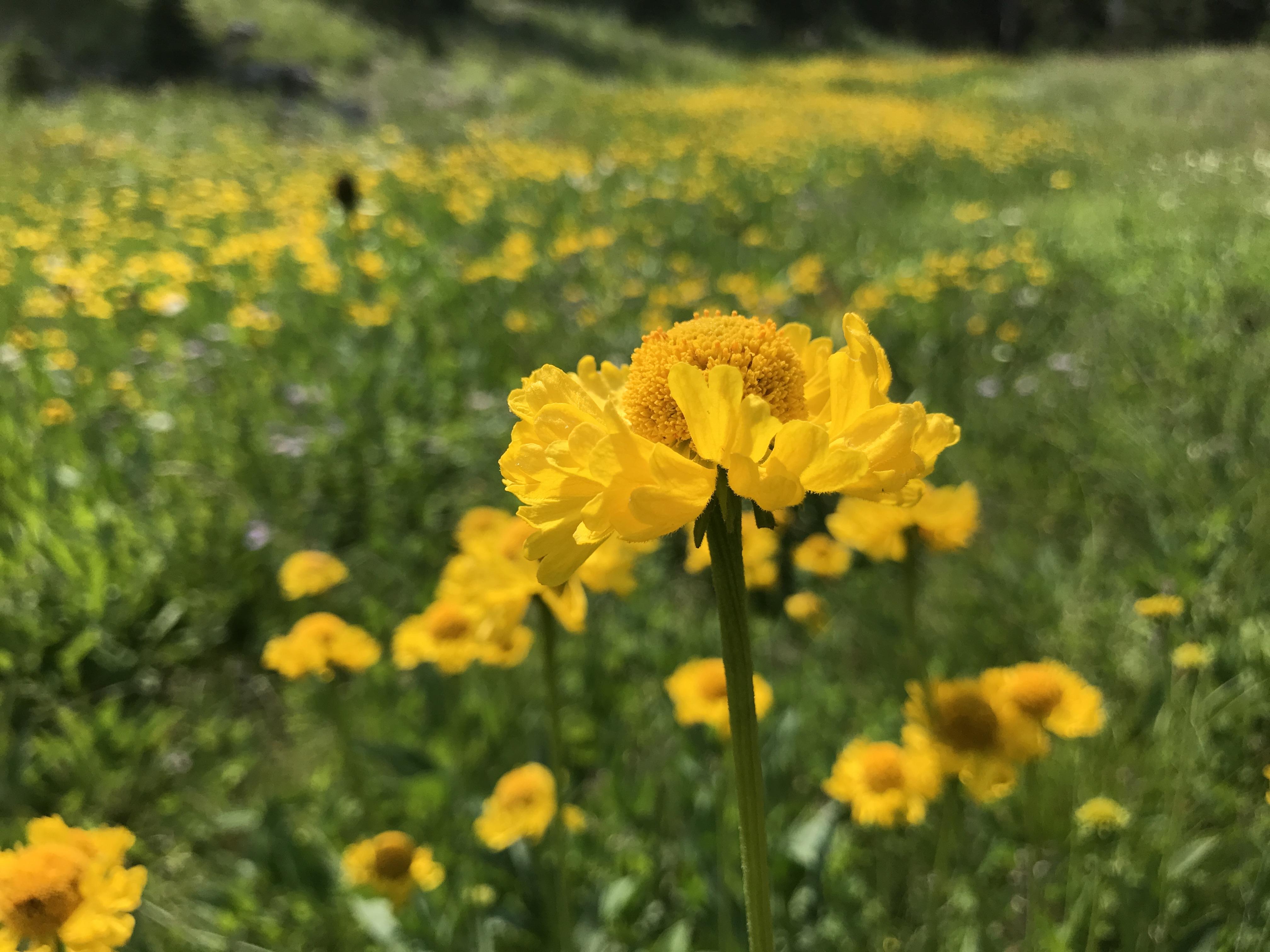 Blog - Page 3 of 10 - Klamath Siskiyou Native Seeds