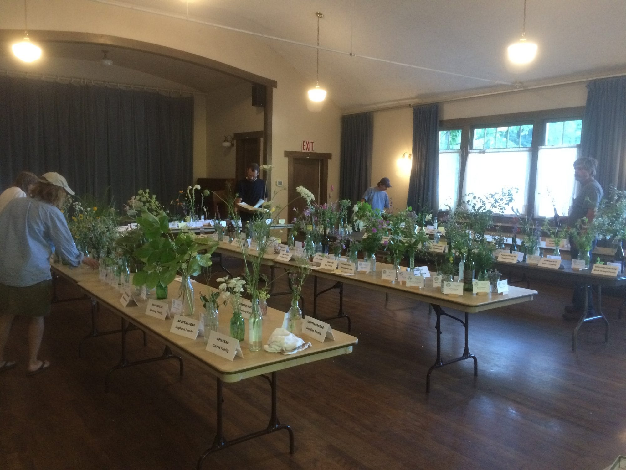 Irene Hollenbeck Memorial Wildflower Show