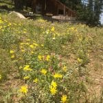 Landscaped native plant meadow in the Siskiyou Mountains