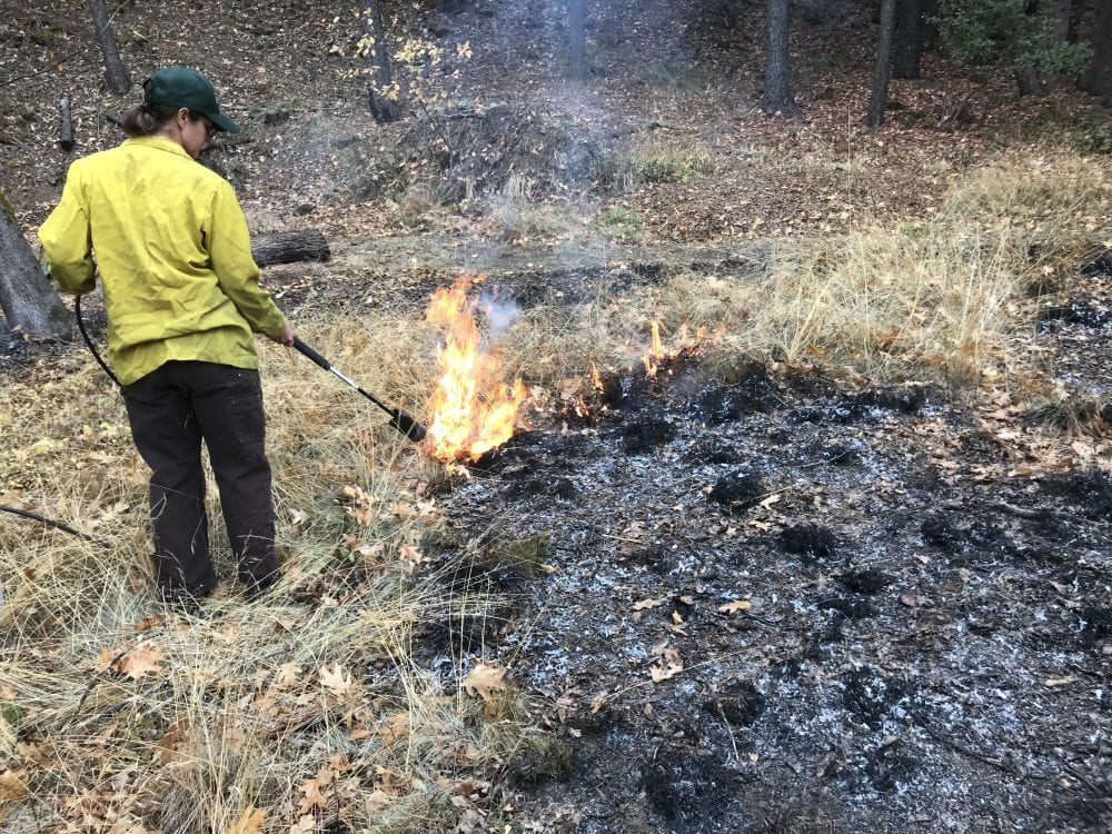 Site Prep Techniques for Native Seeding