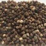 Cynoglossum grande seed