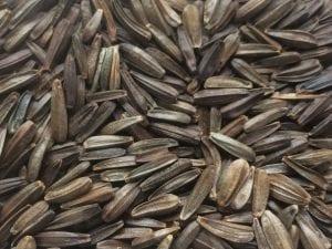 Balsamorhiza deltoidea seed