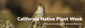 California Native Plant Week